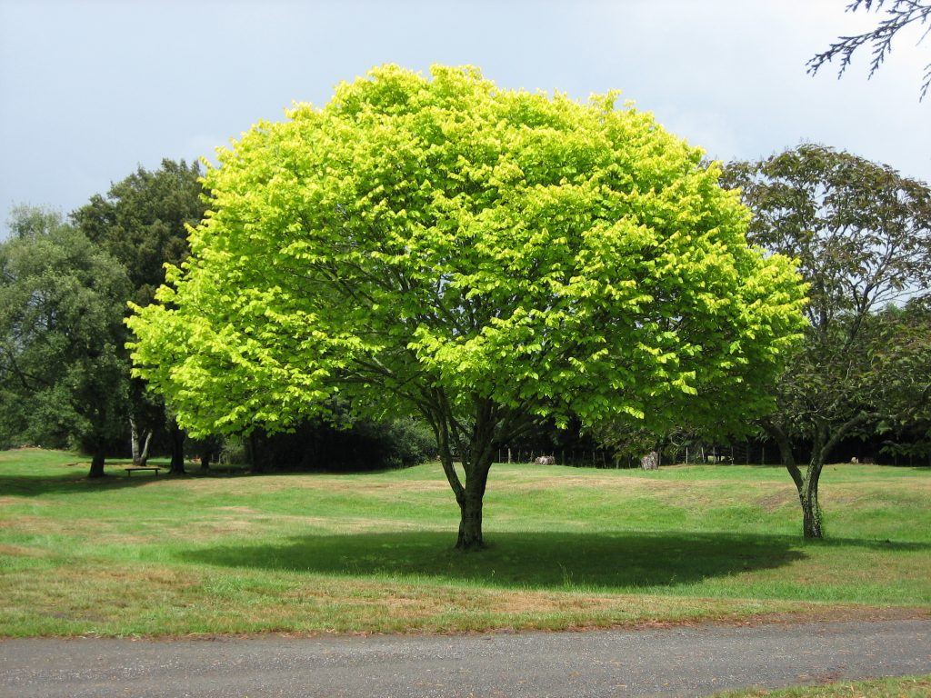 tree park picture naming for speech therapy