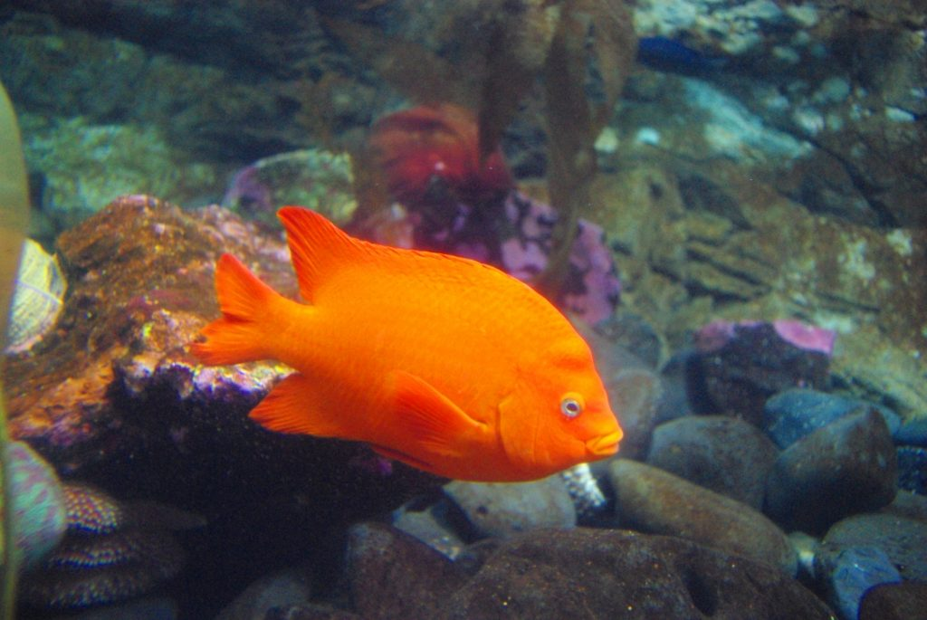 fish picture naming for speech therapy