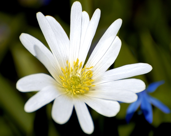 flower picture naming for speech therapy