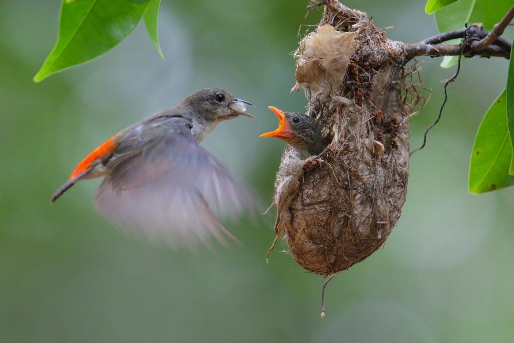 mama bird baby bird nest picture description for speech therapy aphasia, motor speech, visual neglect