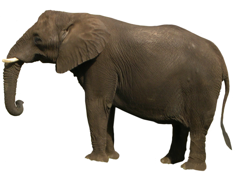elephant picture naming for speech therapy